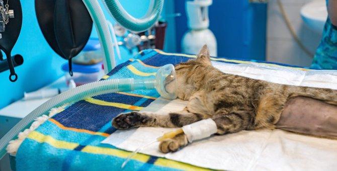 猫が異物を誤飲したときの症状と対策、おもちゃや紐に注意!
