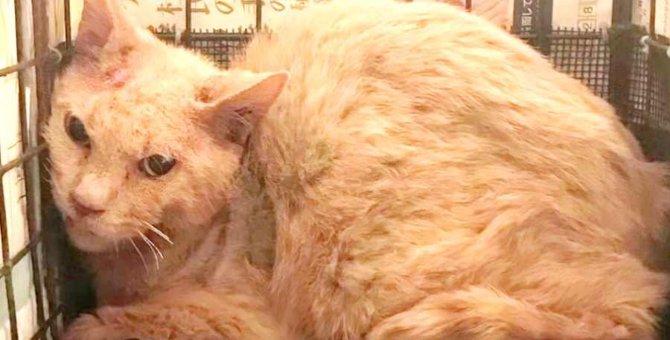 TNRができない悲惨な状態の猫たち…最後に掴んだ幸せとは?
