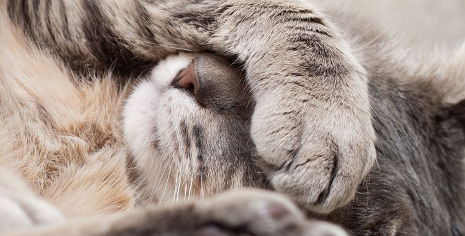 猫が風邪を引く4つの原因と症状や治療法