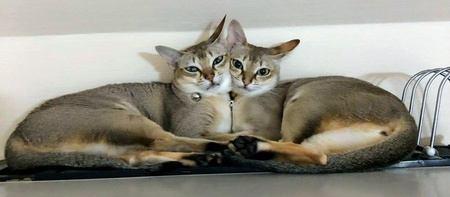 猫が冬場に好む『暖かいスポット』5選!危険も潜む要注意スポットも解説