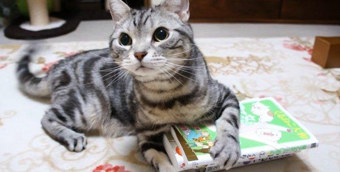 本に厳しい猫ちゃん、新刊チェックは徹底的に!