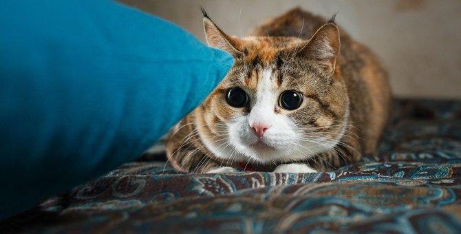 猫が集中しているときに見られる4つの行動