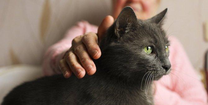 猫を可愛がると幸せな気持ちになる11の理由