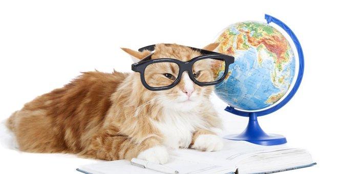 猫は完璧な生き物!猫を称えた偉人6人の言葉