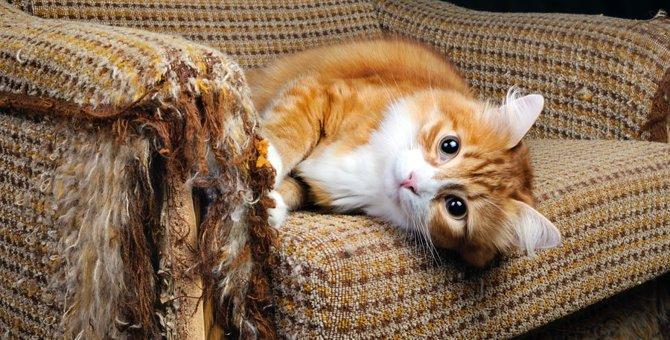 愛猫の問題行動「どこでも爪研ぎ」対策の方法は?