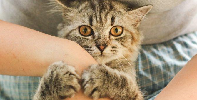 猫が作業中の飼い主の腕を押さえる理由4つ