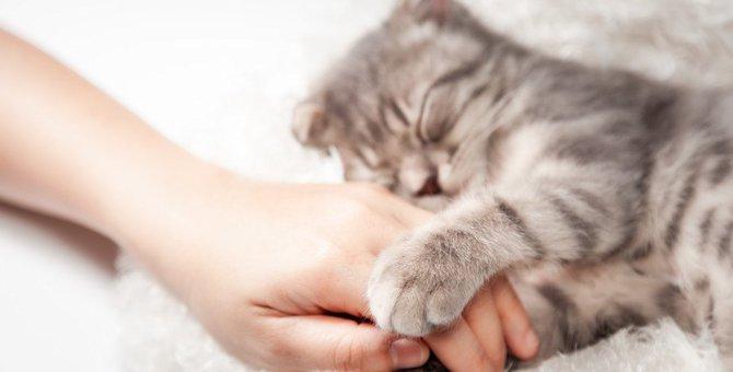 猫がよくする『手の仕草』3つ!実はこんな意味が隠れていた!