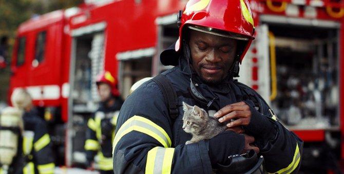 猫飼いさんの防災に必要な備蓄・常備品5つ