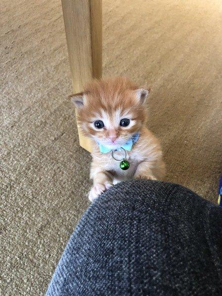 猫のワガママがもたらす『良いこと』5つ