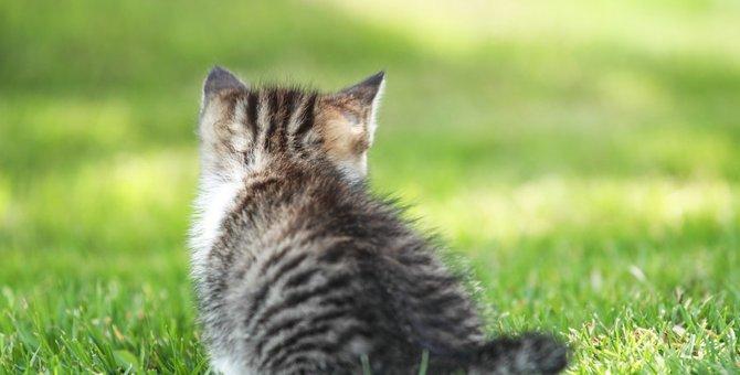 寝ている猫がピクピクする本当の理由と注意すべき場合