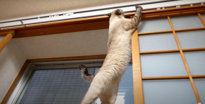 未開の地を目の当たりにした猫ちゃん、みるみるテンションUP!