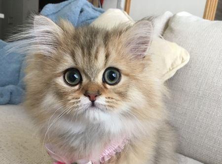 猫は洗わなくても臭わないって本当?