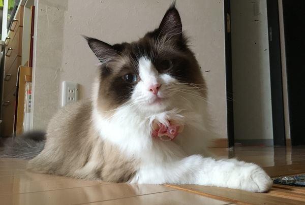 猫の『座り方』で分かる心理4つ