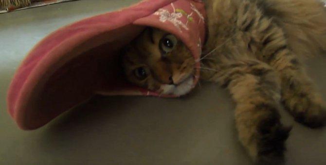 まるで帽子のようにスリッパがハマってとれなくなった猫
