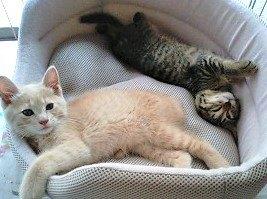 悲しみを救った2匹の子猫…運命の出会いが教えてくれたこととは?