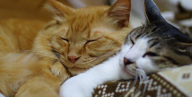 猫の多頭飼いで失敗しないために。注意点から準備、ストレス対策