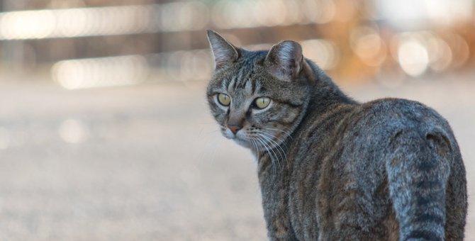 猫に「付いてきて!」と言われて辿り着く4つの場所