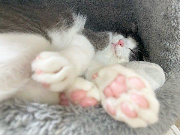 完璧な『猫の肉球』の条件4つ