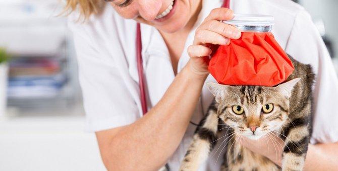 猫の体温が高いときに考えられる原因4つ