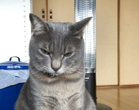 猫が『イライラ』してる時のサイン5つ