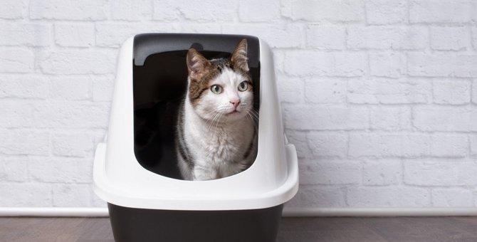 猫のトイレシートはどれくらいで取り替えるべき?