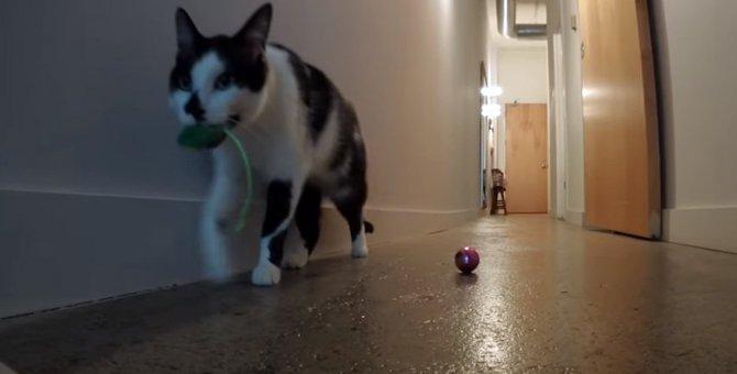 寂しがりやな猫ちゃん、飼い主さんが留守の間どうしてる?