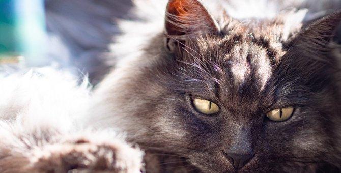猫が『不機嫌』になる3つの原因とケア方法