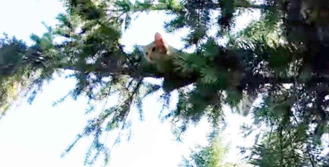木の上で助けを求める猫…救助隊員が目にした驚きの光景とは?