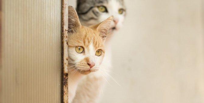 猫が物陰から飼い主をジッと覗く3つの心理