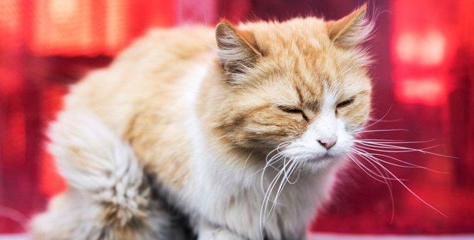 猫が誤飲した時に見られる症状5つと対処法