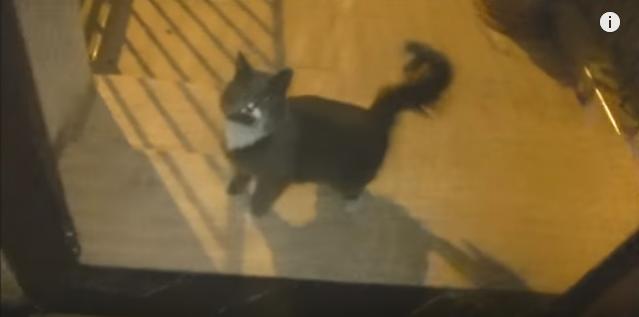 猫同士のテレパシー!?野良猫に捜索をお願いしたら再会できた!(movie)
