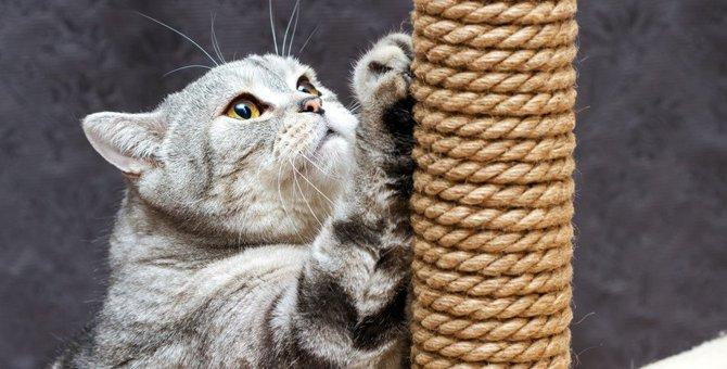 猫の爪を切らないとどうなる?3つの危険性