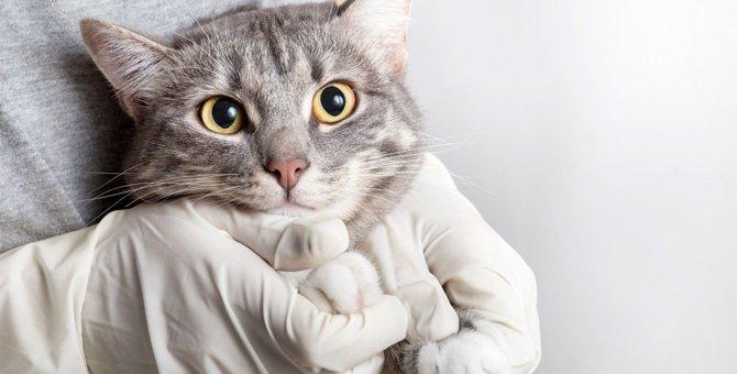 愛猫が「新型コロナ」に感染した時の治療やその費用について