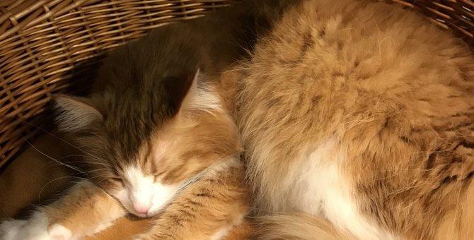 猫はすごい!ただ可愛いだけじゃない3つの癒しパワー