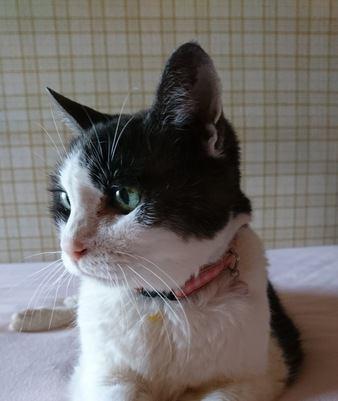 愛猫に20歳超えしてもらうためのポイント5つ