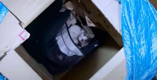 子猫を探して鳴く母猫…保護され家族で幸せな未来へ!