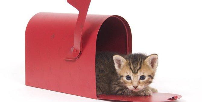 猫の切手可愛い商品5選!購入できる場所や可愛いデザイン