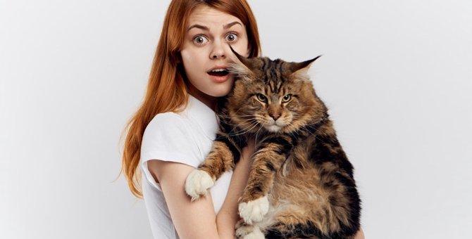 巨大猫「メインクーン」ギネス記録を持つほどの猫と写真まとめ