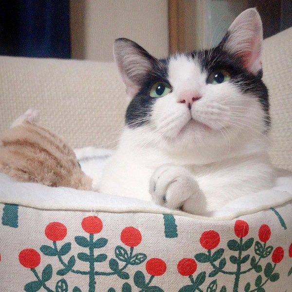 猫が新しいベッドを使ってくれないときに試したい対策5つ