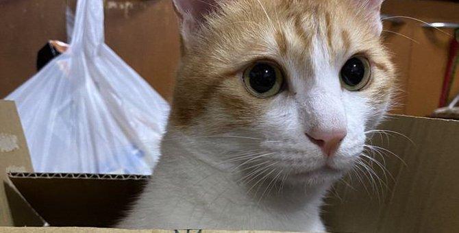 猫が『かくれんぼ』を好む3つの理由!上手な遊び方をマスターしよう