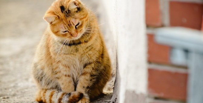 猫も目が回る?ぐるぐる回された時の反応