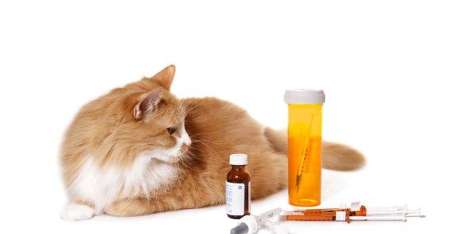 猫の風邪薬について解説! 種類や飲ませ方、注意点まで