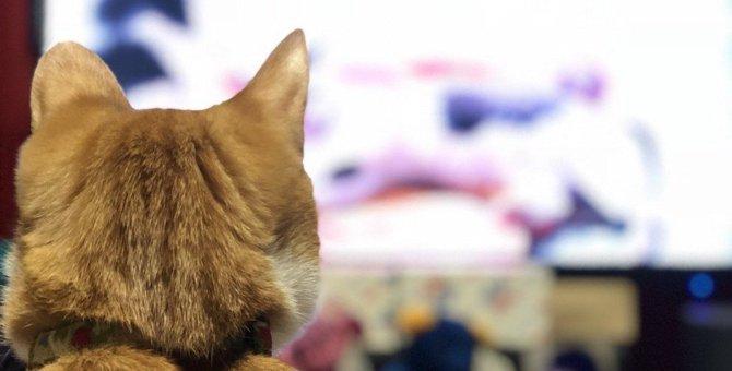 【アンケート調査】猫に好かれそうな芸能人といえば?