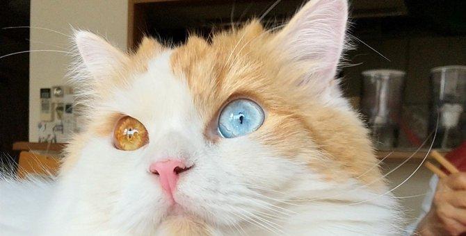 猫が片っ端から『物を落としたがる』5つのワケ!わざと?本能?猫の本音を解説!