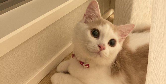 猫は『名前』と『あだ名』を判別できる?