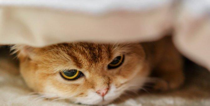 ストレスが原因かもしれない猫の行動6つ