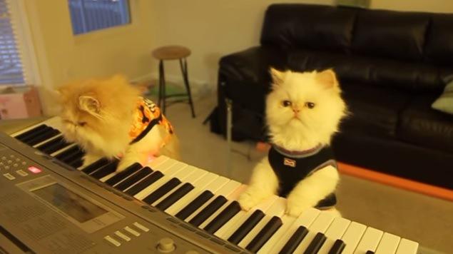 キーボードを練習する子猫たち。奏でるは不気味な音色……