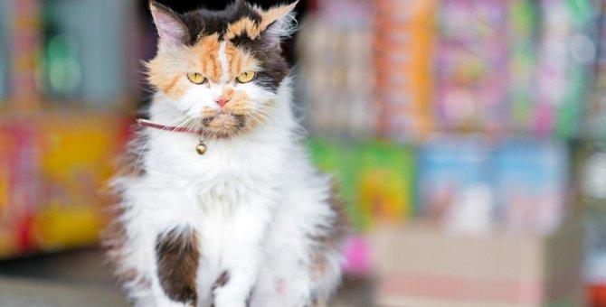 猫の態度が急に冷たくなった…考えられる原因3つ