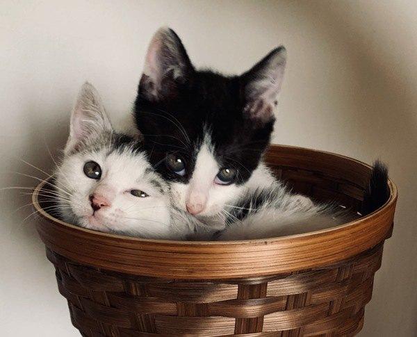 重くないの?猫が重なって寝る理由4つ