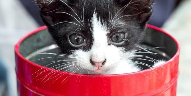 猫に缶詰の食事を与える効果と注意点